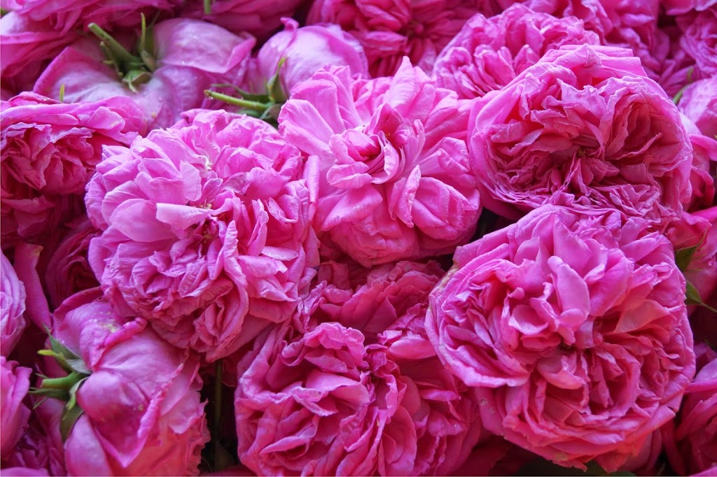 Συνταγή μαγιάτικο γλυκό τριαντάφυλλο