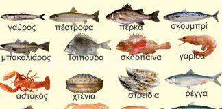 Ο υδράργυρος στα ψάρια – Τι κίνδυνος υπάρχει για την υγεία – Ποια ψάρια έχουν λιγότερο υδράργυρο