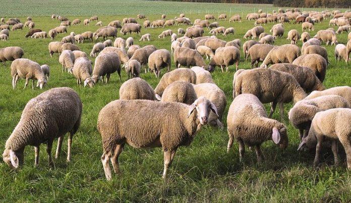 Κτηνοτροφία: Ποια είναι τα κρίσιμα σημεία που πρέπει να ελέγχουμε ...