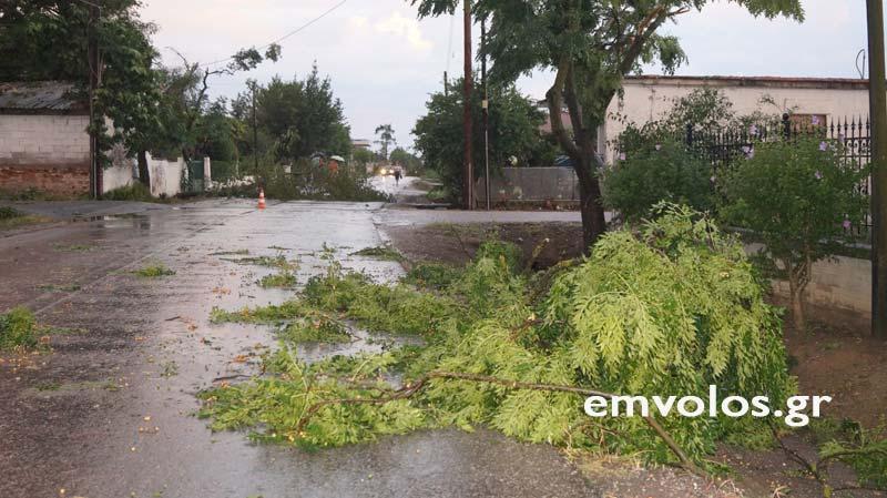 DSC00382 - Εικόνες καταστροφής από την θεομηνία στα Τρίκαλα (φώτο)