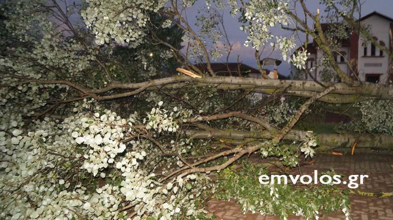 DSC00418 - Εικόνες καταστροφής από την θεομηνία στα Τρίκαλα (φώτο)