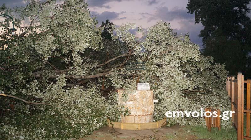 DSC00419 - Εικόνες καταστροφής από την θεομηνία στα Τρίκαλα (φώτο)