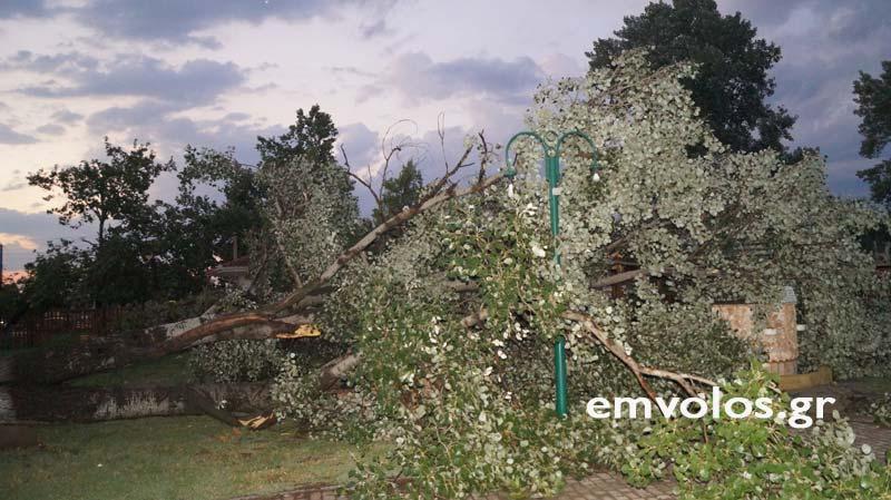 DSC00422 - Εικόνες καταστροφής από την θεομηνία στα Τρίκαλα (φώτο)