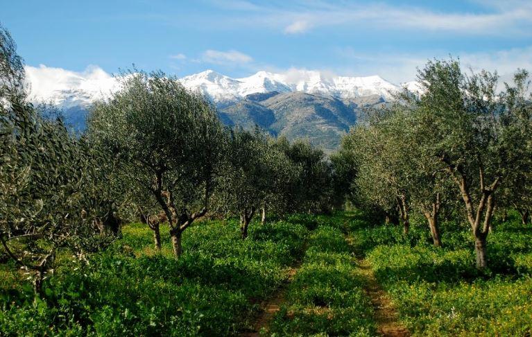 ελαιώνες σακελλαρόπουλου organic olive groves